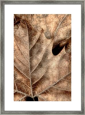 Fallen Leaves II Framed Print