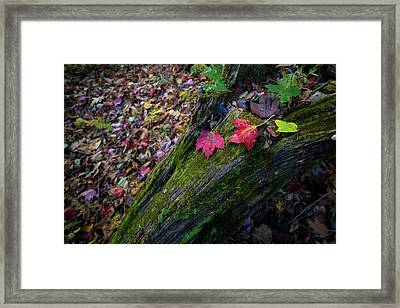 Framed Print featuring the photograph Fallen Leaves On The Limberlost Trail by Lori Coleman