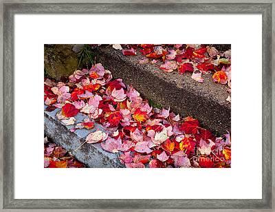 Fallen Leaves On The Steps Framed Print
