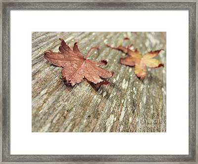 Framed Print featuring the photograph Fallen Leaves by Peggy Hughes
