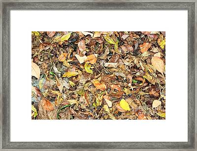 Fallen Leaves Sequel Framed Print by Amy Wilkinson