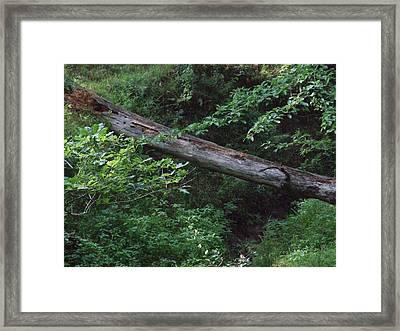 Fallen Log Framed Print by Michael L Kimble