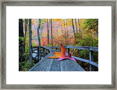 Fallen Maple Leaf Framed Print