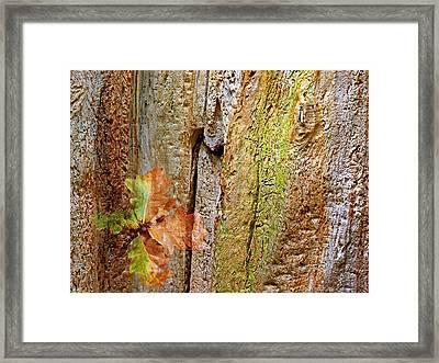 Fallen Oak Leaves Framed Print