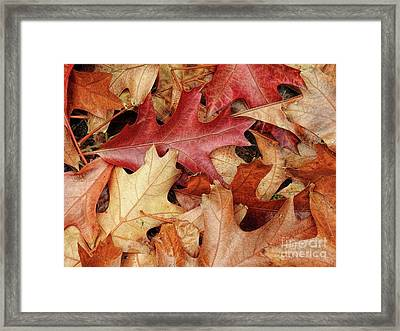 Framed Print featuring the photograph Fallen by Peggy Hughes