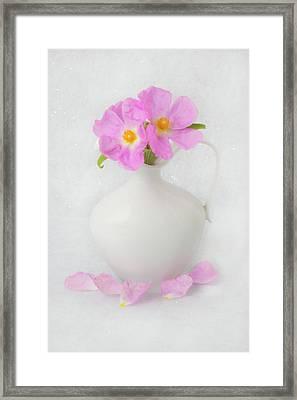 Fallen Petals Framed Print