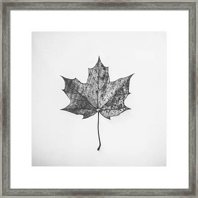 Fallen Red In Monochrome Framed Print by Kate Morton