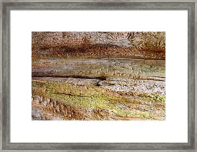 Fallen Tree Abstract Framed Print