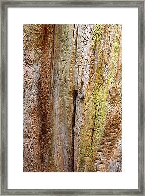 Fallen Tree Abstract Vertical Framed Print
