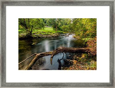 Fallen Tree Framed Print by Adrian Evans