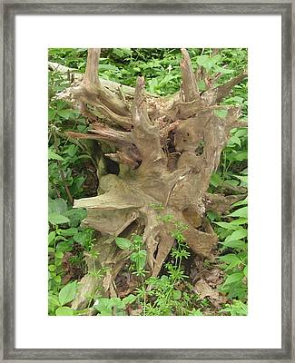 Framed Print featuring the photograph Fallen Tree by Beth Akerman