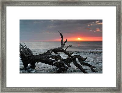 Fallen Tree In Ocean At Sunrise Framed Print by Bruce Gourley