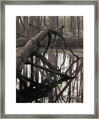 Fallen Tree In The Forest Framed Print by Dan Sproul