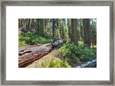 Fallen Tree- Framed Print