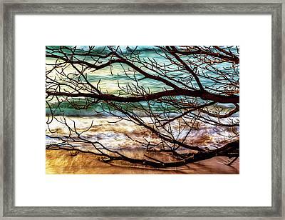 Fallen Tree Framed Print by Kelley King