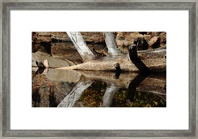 Framed Print featuring the photograph Fallen Tree Mirror Image by Debbie Oppermann