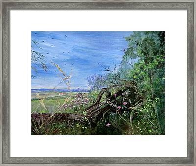 Fallen Tree Framed Print by Muriel Law
