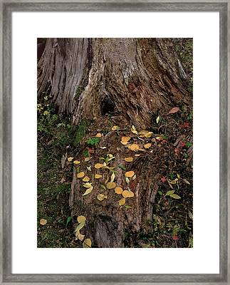 Fallen Tree Offerings Framed Print