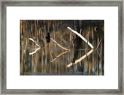 Fallen Trees Framed Print by Lori Mellen-Pagliaro