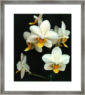 Falling Angels Framed Print by Mindy Newman