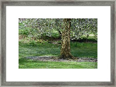 Falling Blossom Framed Print