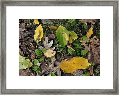 Falling Framed Print by JAMART Photography