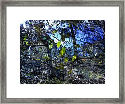 Falling Leaves Framed Print by Kelly Jade King