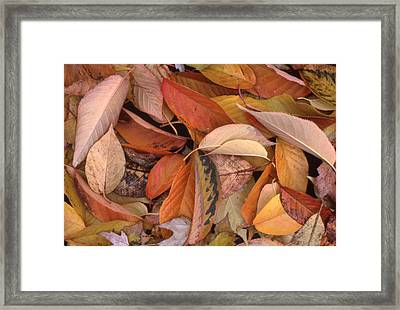 Falling Leaves On The Ground Framed Print by Lyle Crump