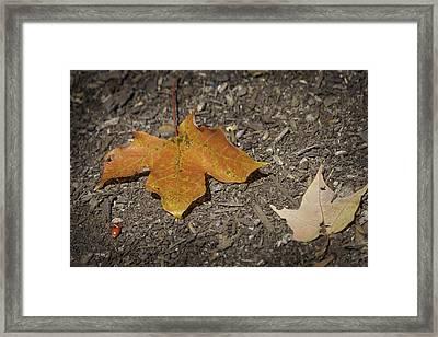 Falling Leaves Framed Print by Teresa Mucha