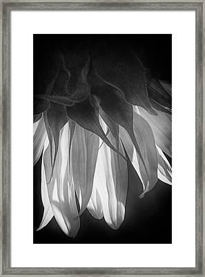 Falling Monochrome  Framed Print