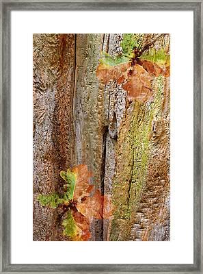 Falling Oak Leaves Framed Print