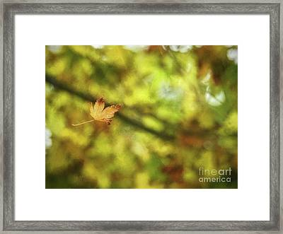 Framed Print featuring the photograph Falling by Peggy Hughes