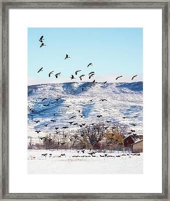 Falling Skies - Canada Geese Framed Print