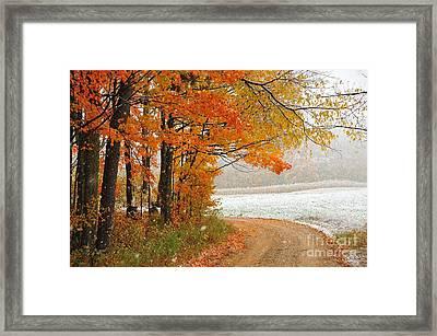 Falling Snow In Autumn Framed Print by Terri Gostola