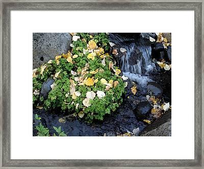 Falling Water I Framed Print by Jim Bachmeier