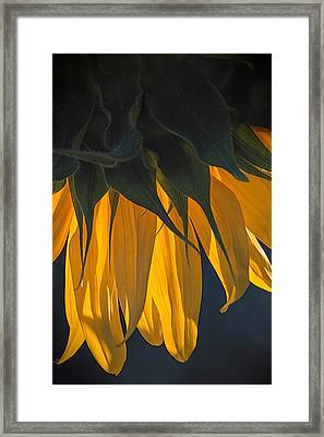 Falling Yellow  Framed Print
