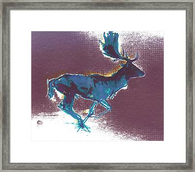Fallow Buck Framed Print by Mark Adlington