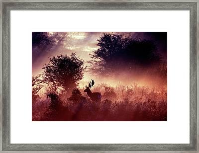 Fallow Deer In Fairytale World Framed Print
