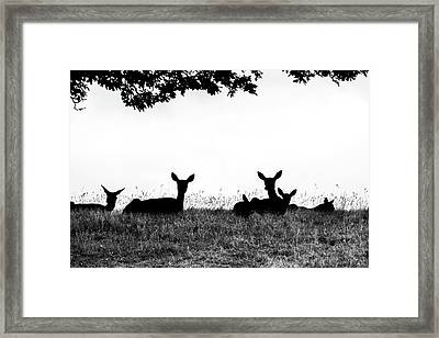 fallow Deer Framed Print by Yorkshire In Colour