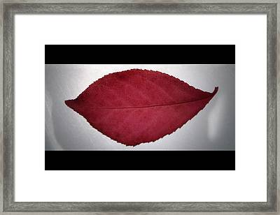 Fall's Kiss Framed Print