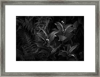 False Hellebore Framed Print by Thorsten Scheuermann