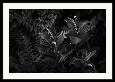False Hellebore Framed Prints