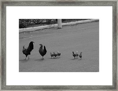Familiar Outing Framed Print by Sean Green