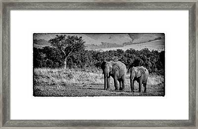 Familly Of Elephants Framed Print by Alain Gaymard