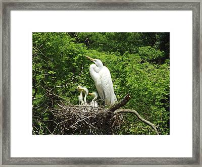 Family Affair Framed Print