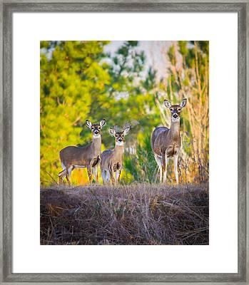 Family Bonds Framed Print