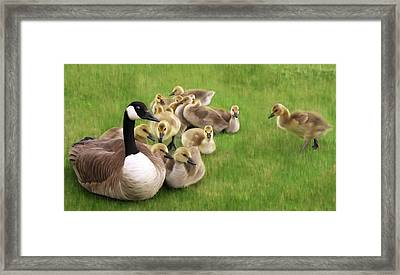 Family Huddle - Canada Goose And Goslings Nature Painting Framed Print by Rayanda Arts
