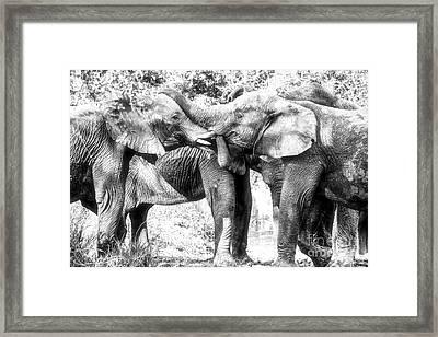 Family Framed Print by Juergen Klust