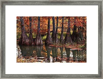 Framed Print featuring the photograph Family Of Cypress At Lake Murray by Tamyra Ayles