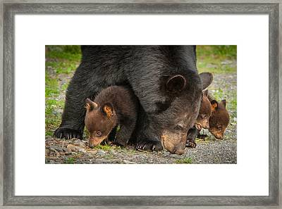 Family Of Four Framed Print
